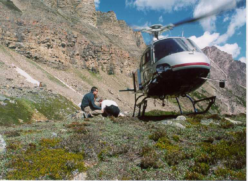 Helicopter Tour Of Canadian Rockies With Icefield Helicopter Tours In Lake Lo